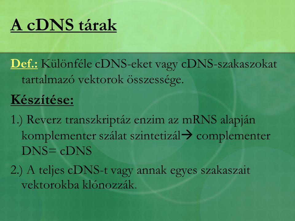A cDNS tárak Készítése: