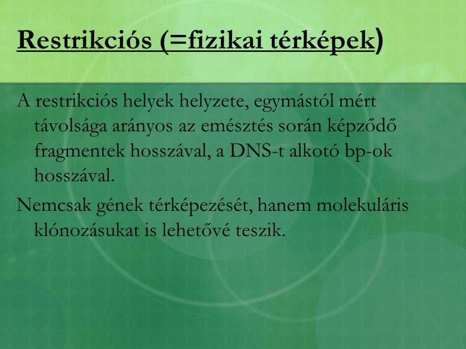 Restrikciós (=fizikai térképek)