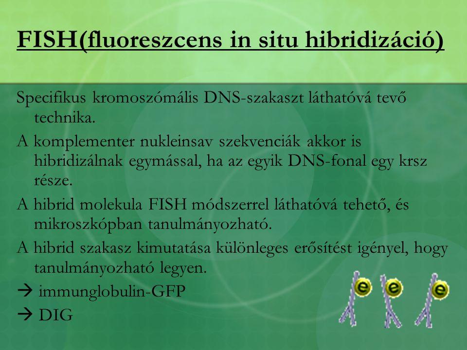 FISH(fluoreszcens in situ hibridizáció)