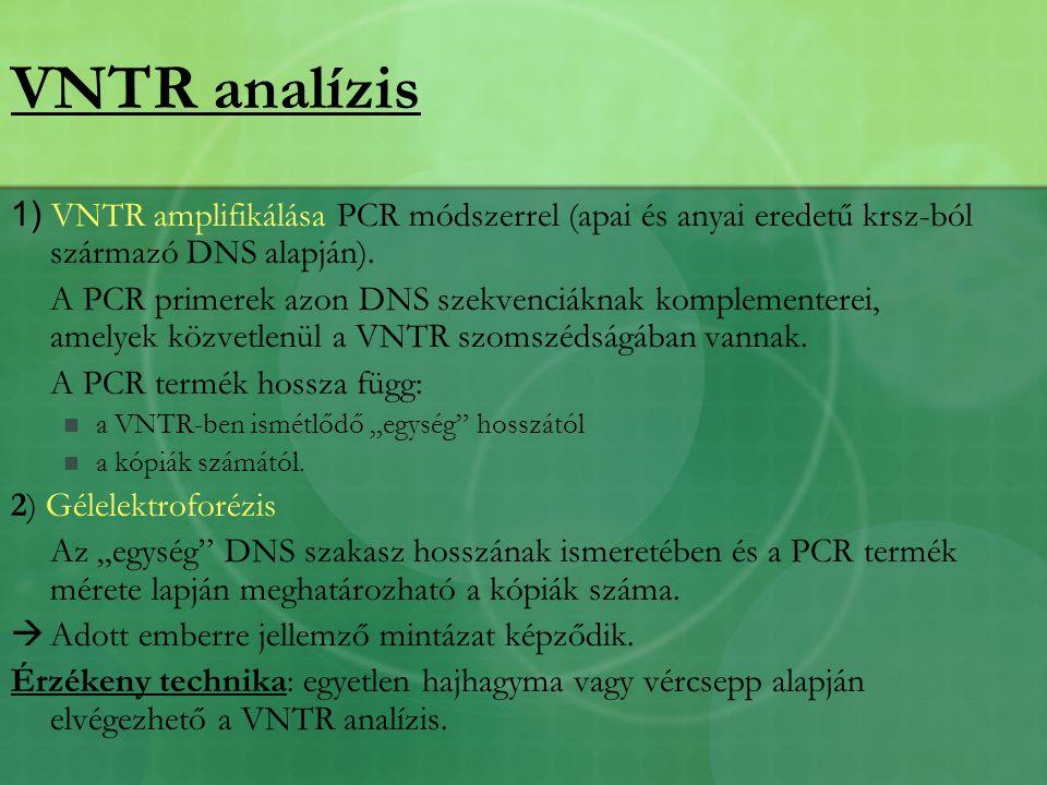 VNTR analízis 1) VNTR amplifikálása PCR módszerrel (apai és anyai eredetű krsz-ból származó DNS alapján).