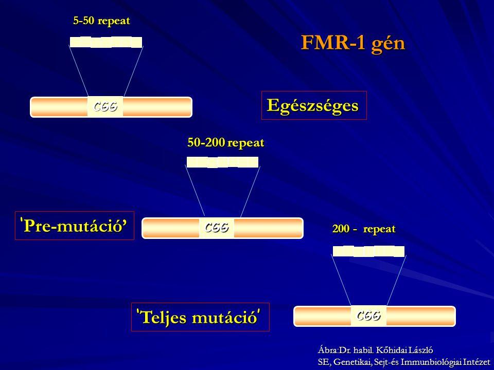 FMR-1 gén Egészséges 'Pre-mutáció' 'Teljes mutáció' 50-200 repeat