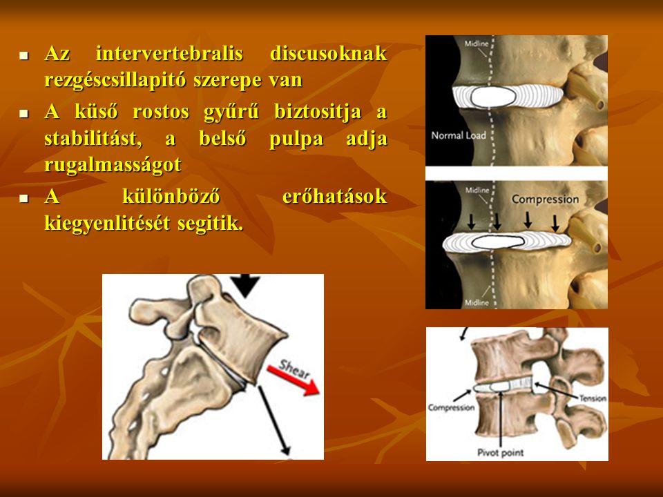 Az intervertebralis discusoknak rezgéscsillapitó szerepe van