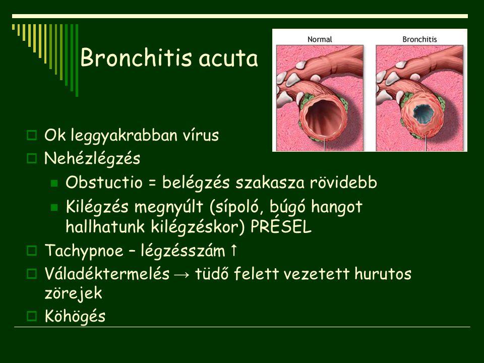 Bronchitis acuta Obstuctio = belégzés szakasza rövidebb