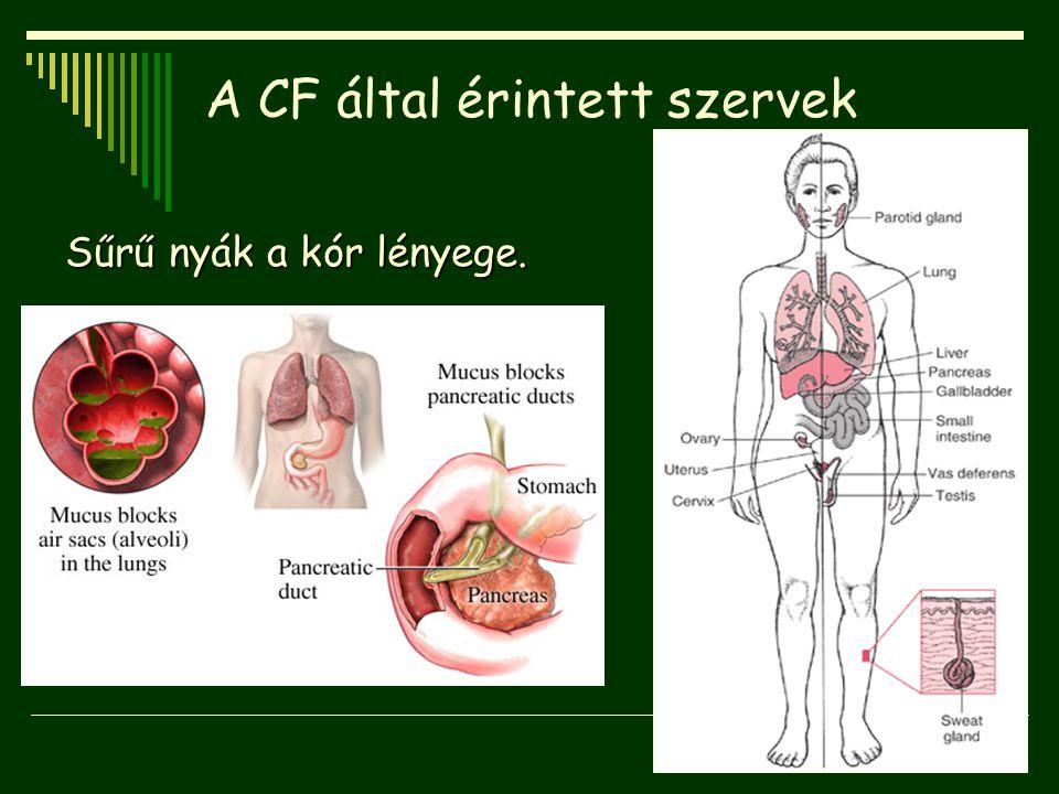 A CF által érintett szervek