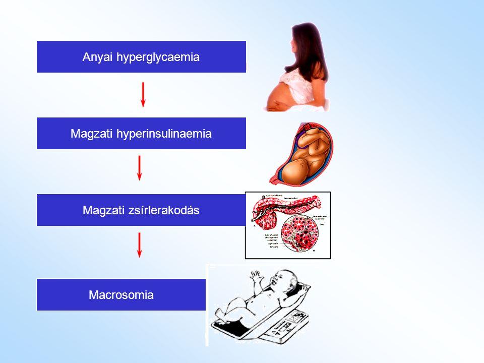 Magzati hyperinsulinaemia