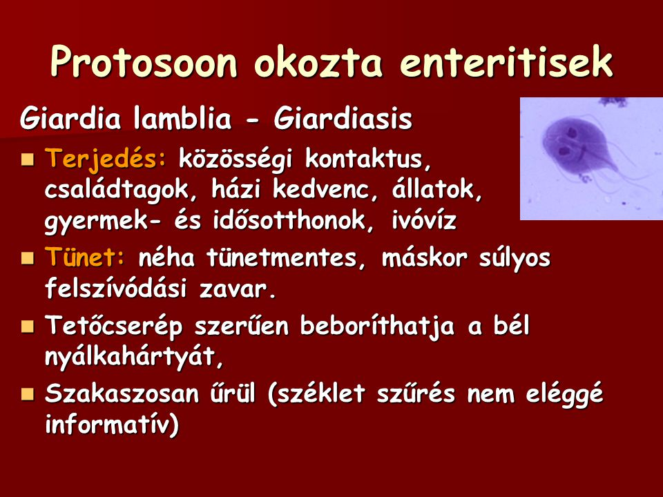 Protosoon okozta enteritisek