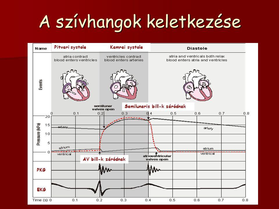 A szívhangok keletkezése