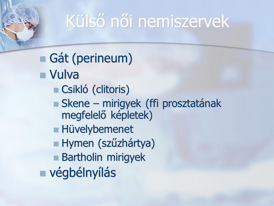 Külső női nemiszervek Gát (perineum) Vulva végbélnyílás
