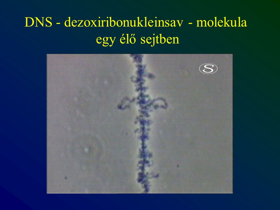 DNS - dezoxiribonukleinsav - molekula