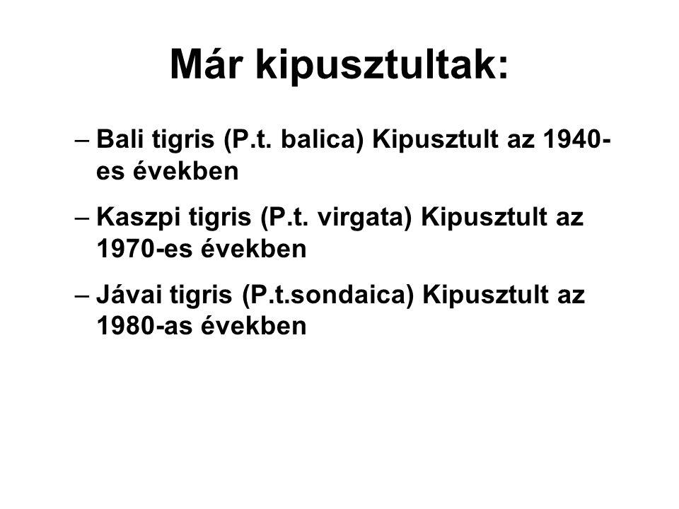 Már kipusztultak: Bali tigris (P.t. balica) Kipusztult az 1940-es években. Kaszpi tigris (P.t. virgata) Kipusztult az 1970-es években.