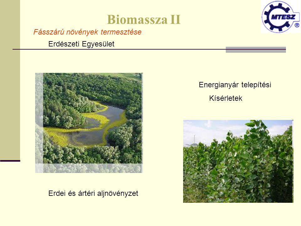 Biomassza II Fásszárú növények termesztése