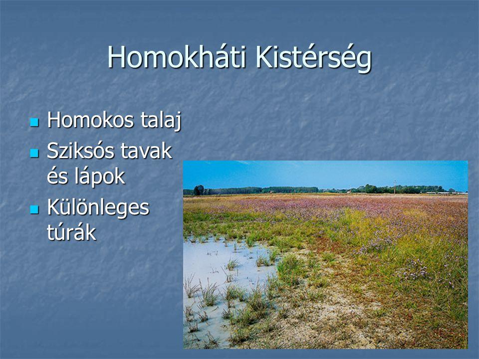 Homokháti Kistérség Homokos talaj Sziksós tavak és lápok