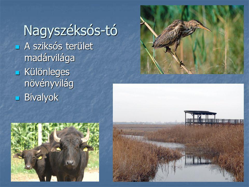 Nagyszéksós-tó A sziksós terület madárvilága Különleges növényvilág