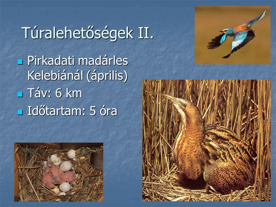 Túralehetőségek II. Pirkadati madárles Kelebiánál (április) Táv: 6 km