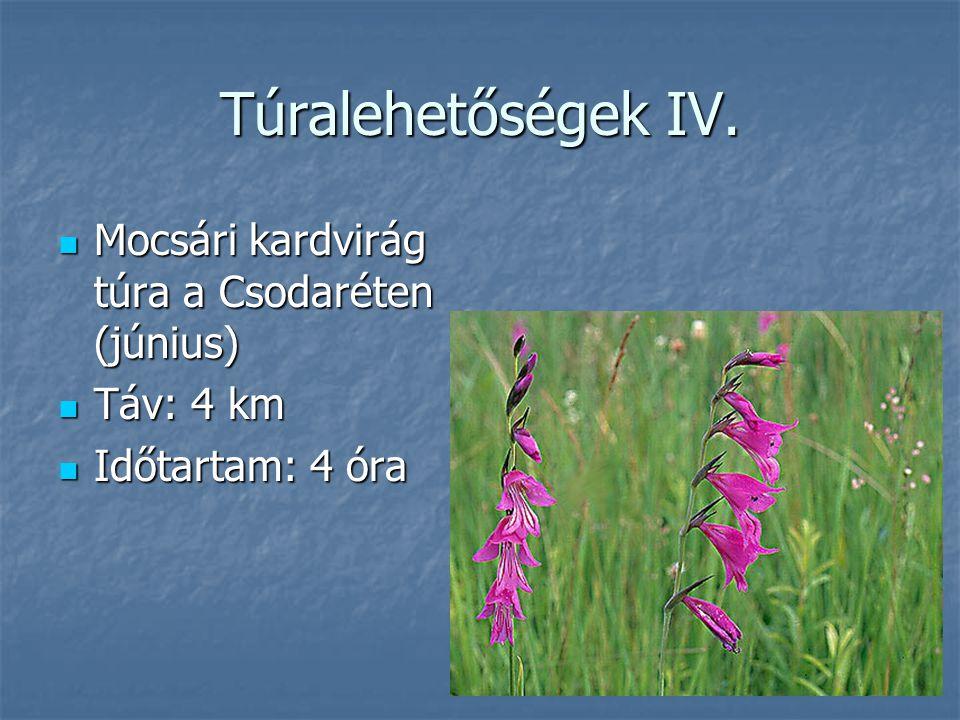 Túralehetőségek IV. Mocsári kardvirág túra a Csodaréten (június)