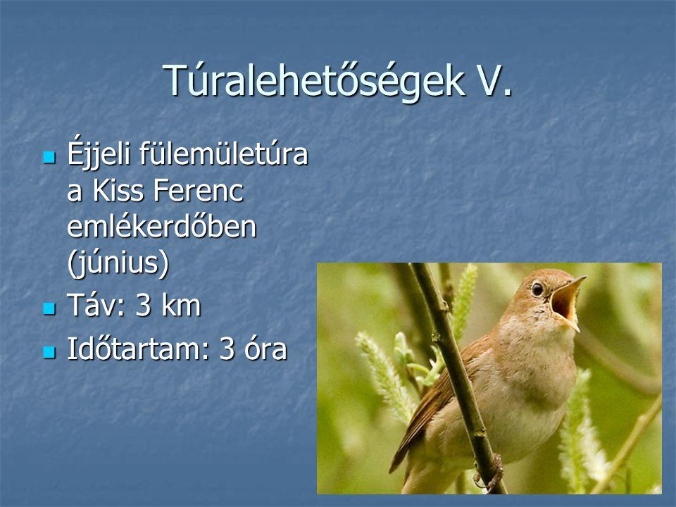 Túralehetőségek V. Éjjeli fülemületúra a Kiss Ferenc emlékerdőben (június) Táv: 3 km.