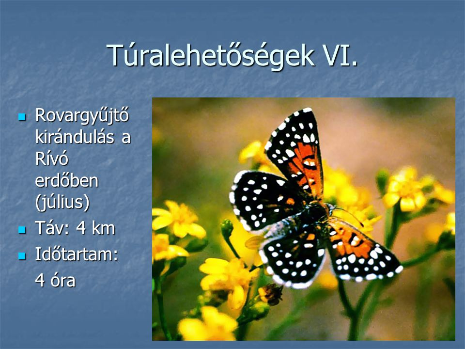 Túralehetőségek VI. Rovargyűjtő kirándulás a Rívó erdőben (július)