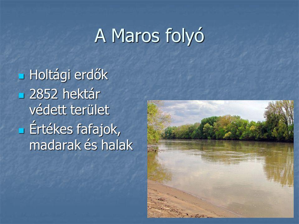 A Maros folyó Holtági erdők 2852 hektár védett terület