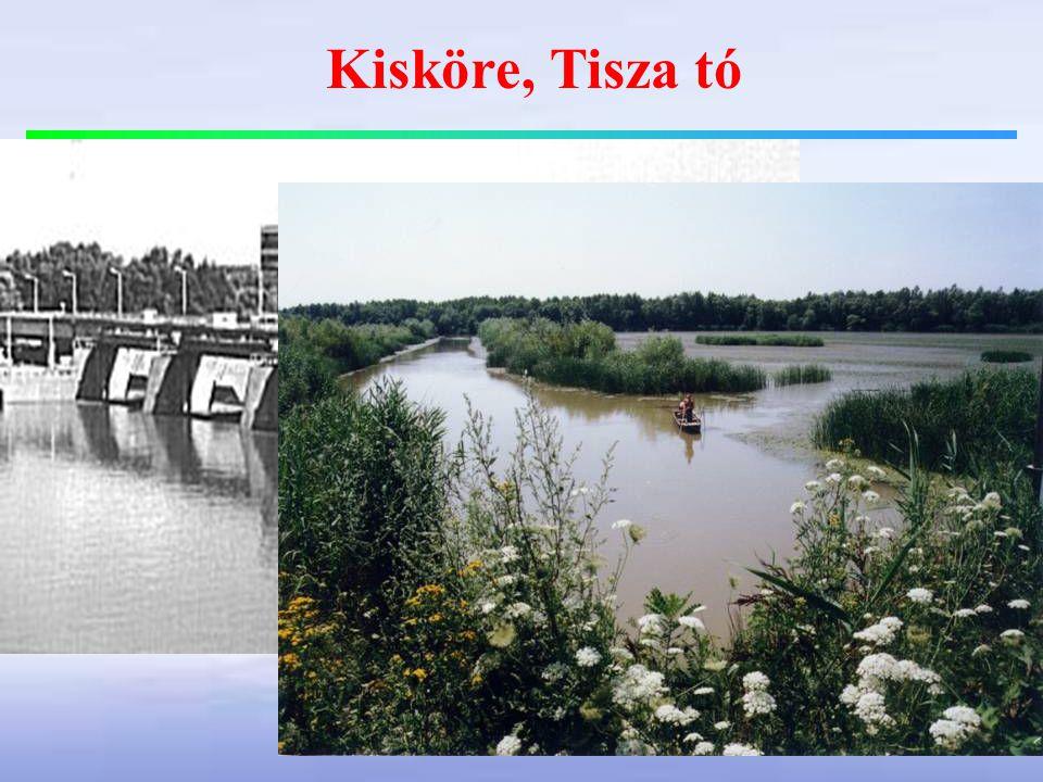 Kisköre, Tisza tó