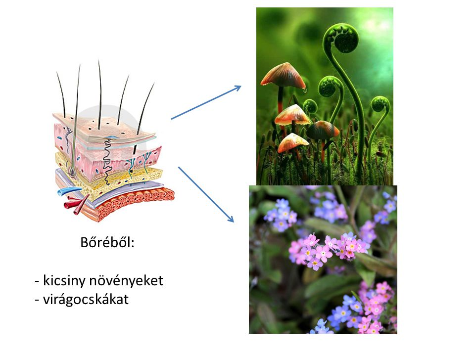 Bőréből: kicsiny növényeket virágocskákat