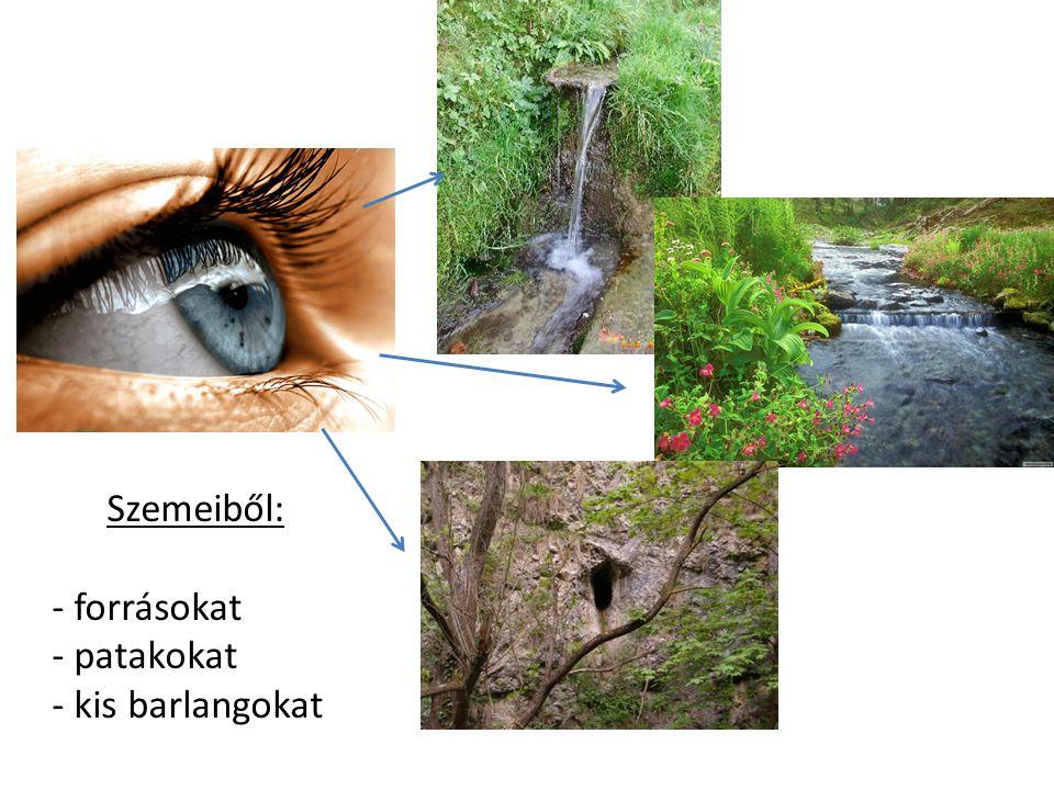 Szemeiből: forrásokat patakokat kis barlangokat
