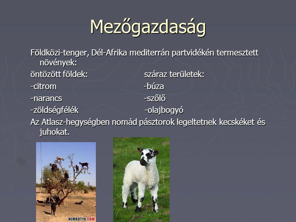 Mezőgazdaság Földközi-tenger, Dél-Afrika mediterrán partvidékén termesztett növények: öntözött földek: száraz területek: