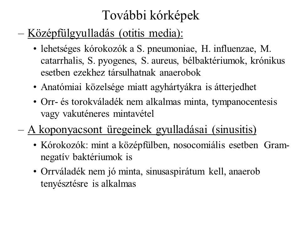 További kórképek Középfülgyulladás (otitis media):