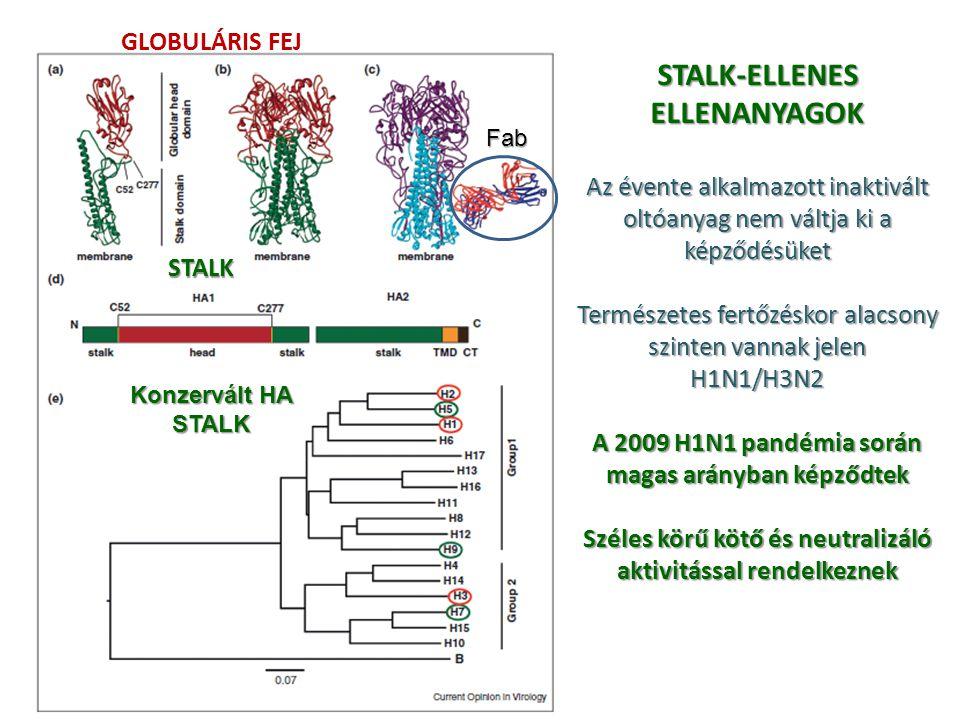 STALK-ELLENES ELLENANYAGOK