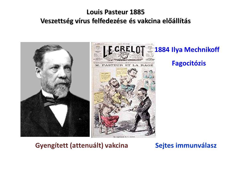 Louis Pasteur 1885 Veszettség vírus felfedezése és vakcina előállítás