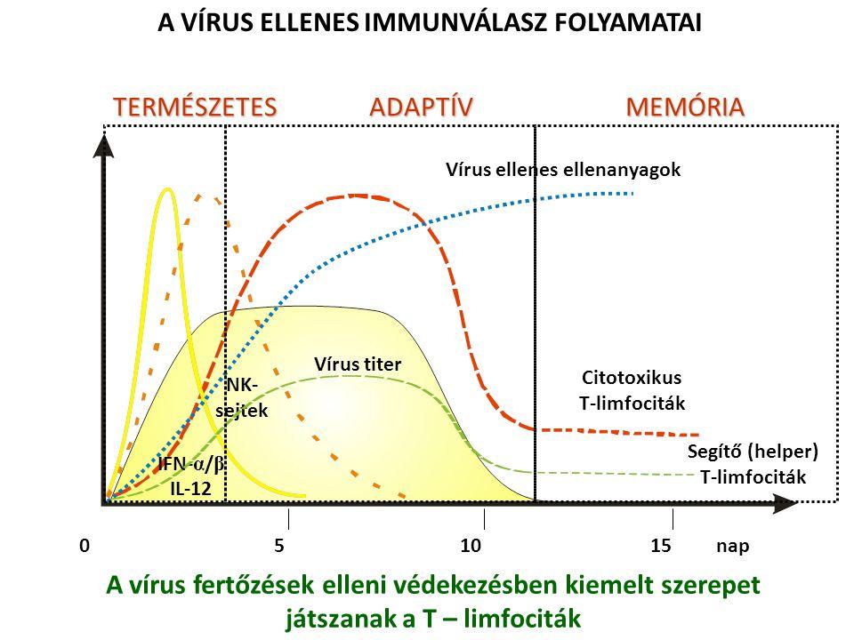 A VÍRUS ELLENES IMMUNVÁLASZ FOLYAMATAI