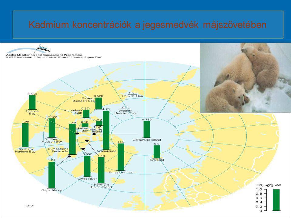 Kadmium koncentrációk a jegesmedvék májszövetében