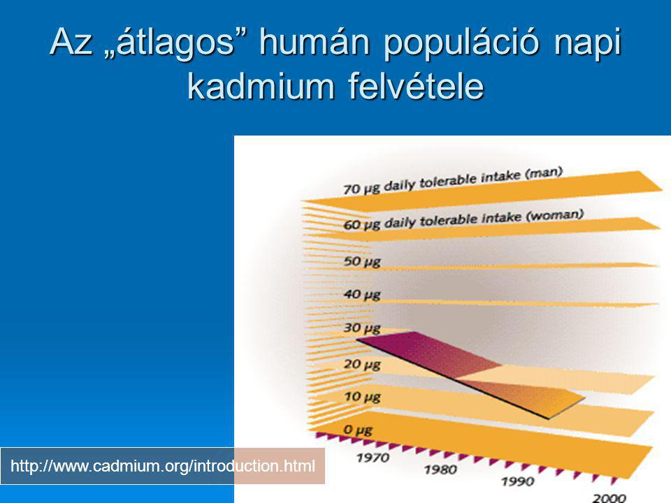 """Az """"átlagos humán populáció napi kadmium felvétele"""
