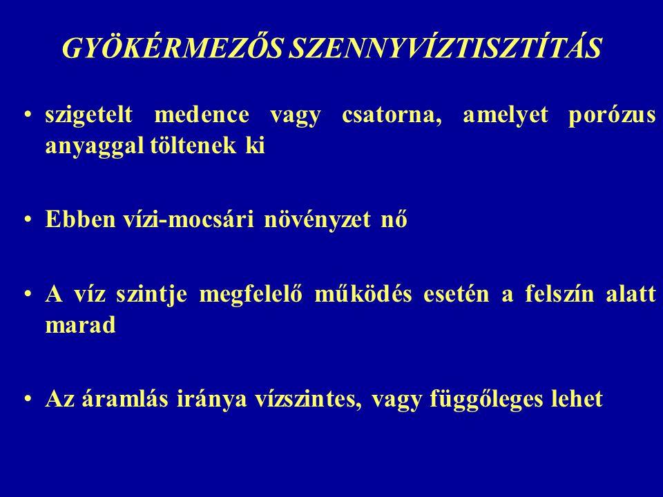 GYÖKÉRMEZŐS SZENNYVÍZTISZTÍTÁS