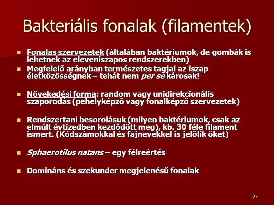Bakteriális fonalak (filamentek)