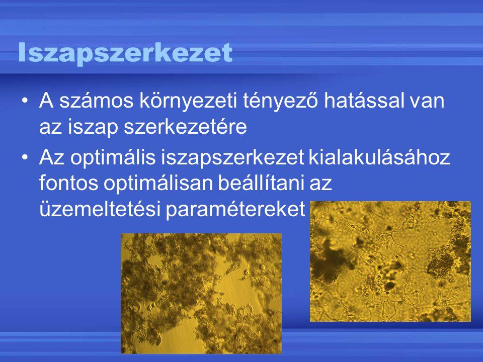 Iszapszerkezet A számos környezeti tényező hatással van az iszap szerkezetére.