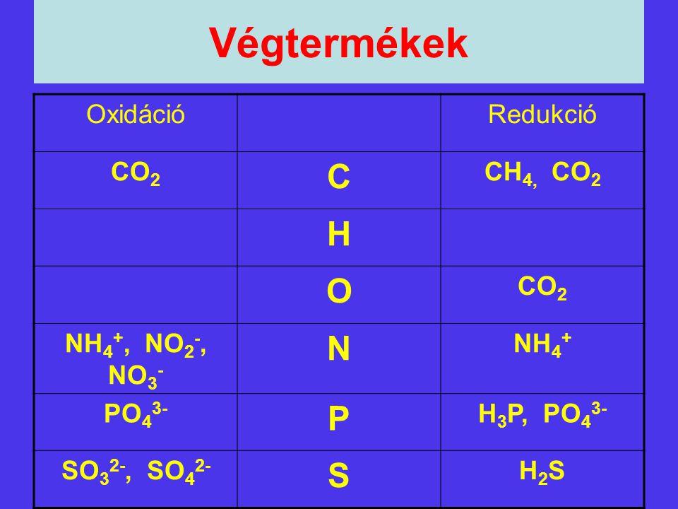 Végtermékek C H O N P S Oxidáció Redukció CO2 CH4, CO2