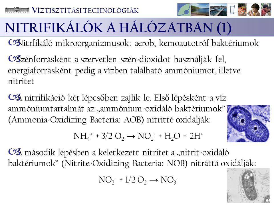 NITRIFIKÁLÓK A HÁLÓZATBAN (1)