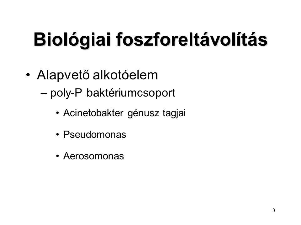 Biológiai foszforeltávolítás