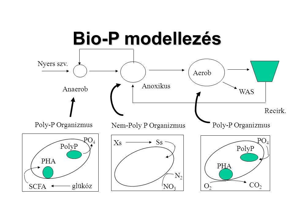 Bio-P modellezés Nyers szv. Anaerob Anoxikus Aerob WAS Recirk.