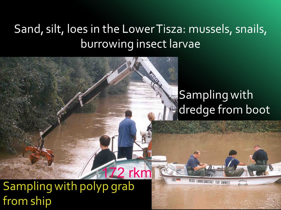 Sand, silt, loes in the Lower Tisza: mussels, snails, burrowing insect larvae