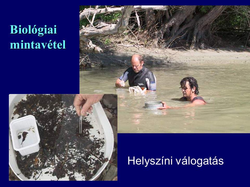 Biológiai mintavétel Helyszíni válogatás