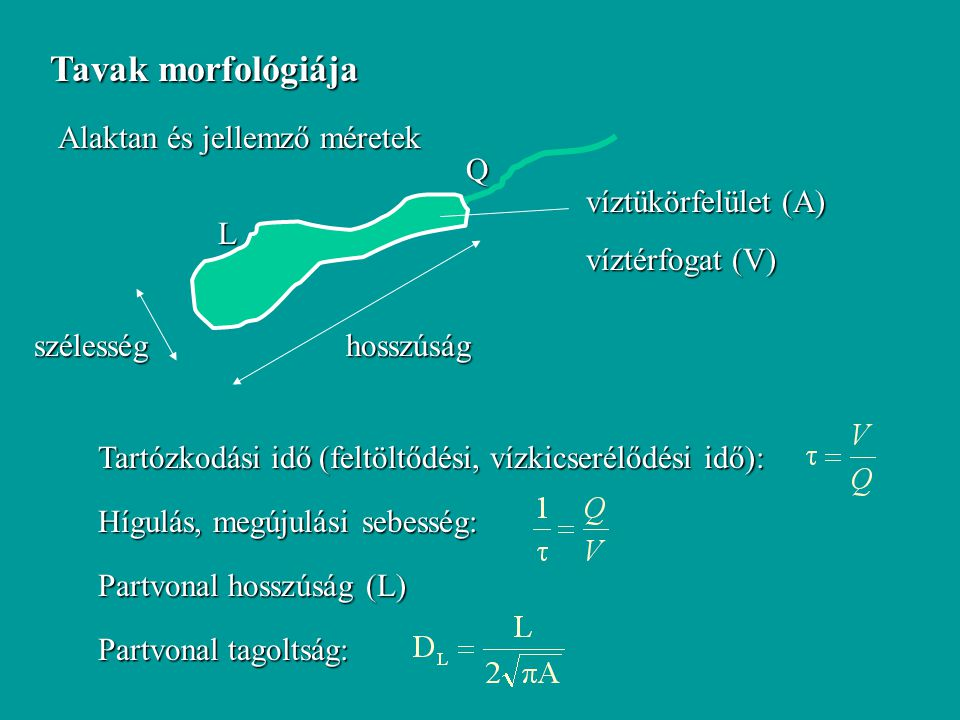 Tavak morfológiája Alaktan és jellemző méretek hosszúság szélesség