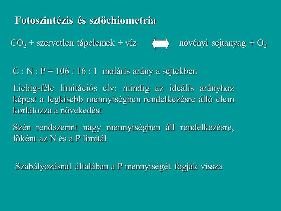 Fotoszintézis és sztöchiometria
