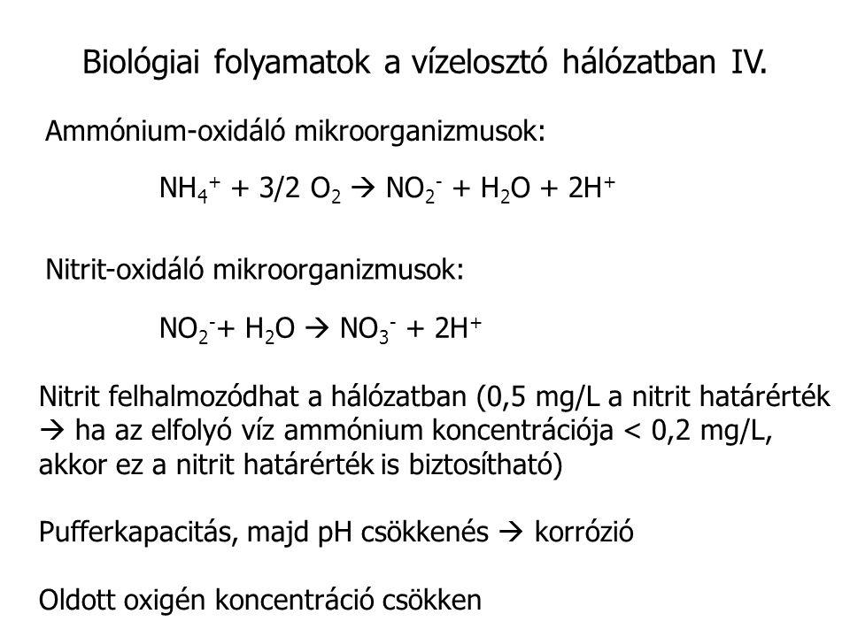 Biológiai folyamatok a vízelosztó hálózatban IV.
