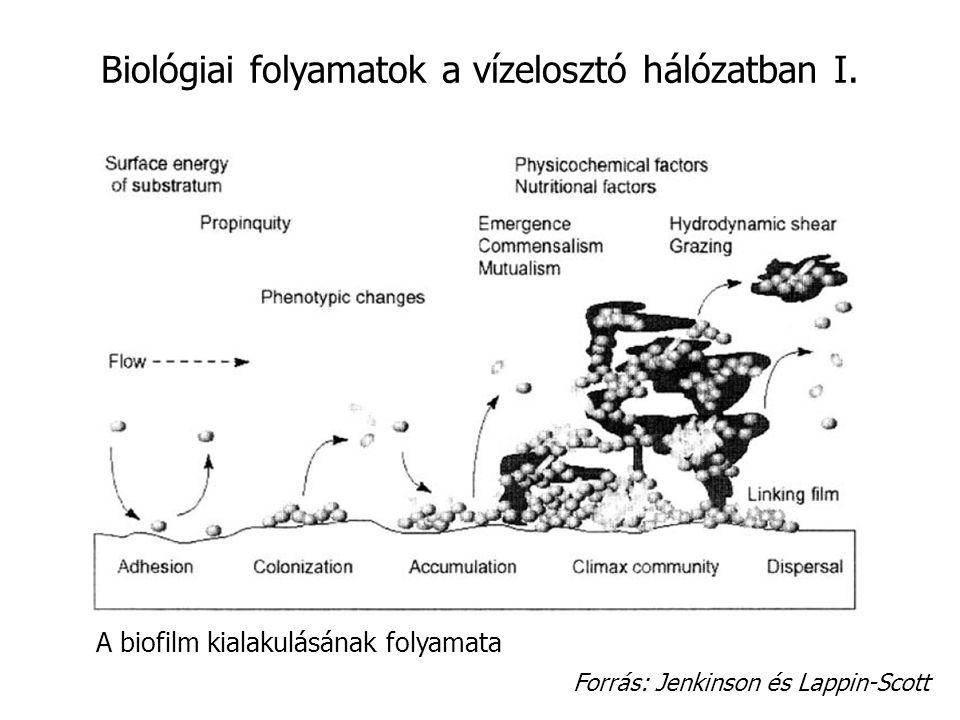 Biológiai folyamatok a vízelosztó hálózatban I.