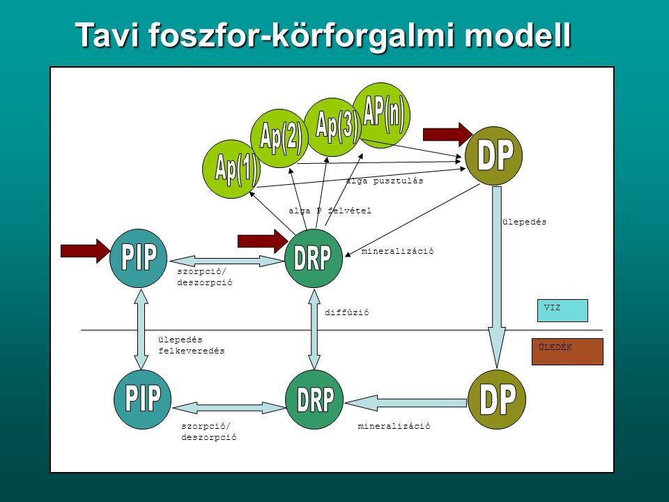 Tavi foszfor-körforgalmi modell