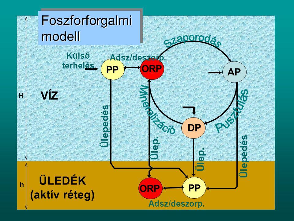 Foszforforgalmi modell