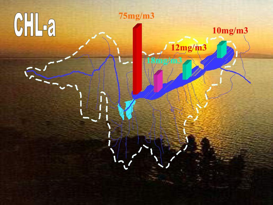 75mg/m3 CHL-a 10mg/m3 12mg/m3 18mg/m3