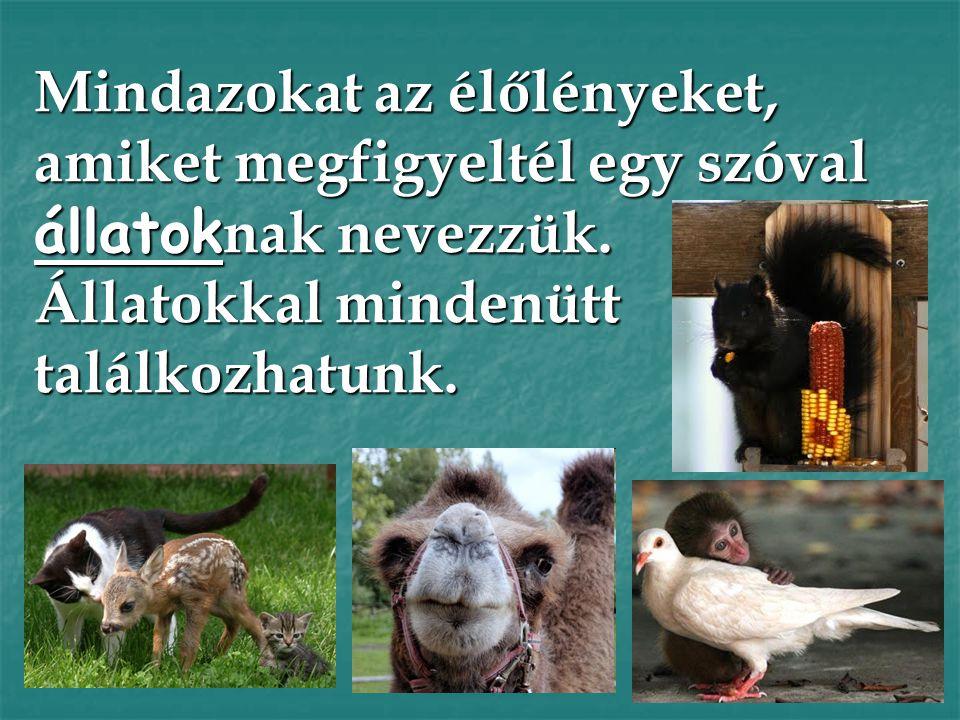 Mindazokat az élőlényeket, amiket megfigyeltél egy szóval állatoknak nevezzük.