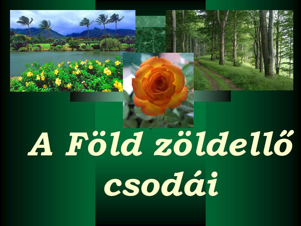 A Föld zöldellő csodái